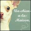 Un-chien-a-la-Maison