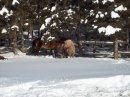 Photo de horsie-paradis