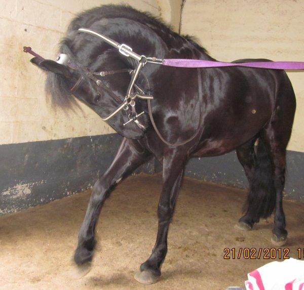 Doeike <3 Un vrai cheval de Show!