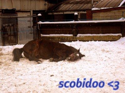 *Scobidoo*