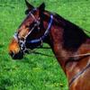 Loove-chevaux