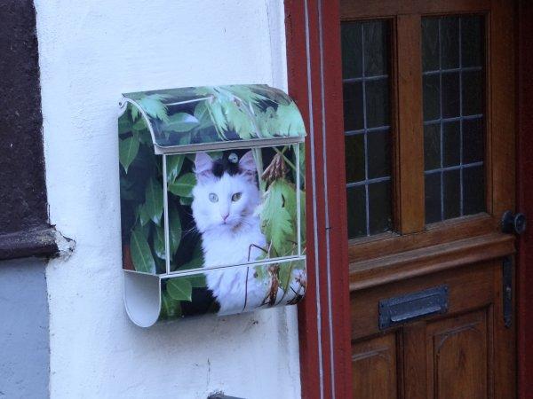 boite aux lettres chat