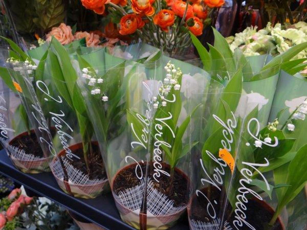 Amsterdam, marche aux fleurs