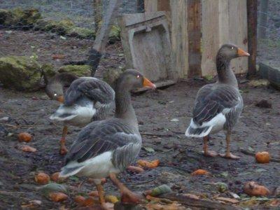 Les nouveaux amis de la ferme arrivé en novembre