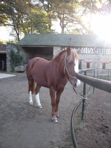mes potes mon cheval...