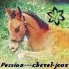 Photo de Passion---Cheval-Jeux